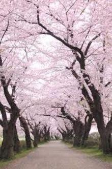 Gặp Anh Vào Mùa Hoa Đẹp Nhất